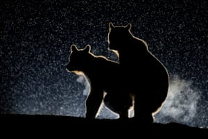 Bence Mate wins highly commended for his shot of two bears having some night-time fun in Harghita, Romania