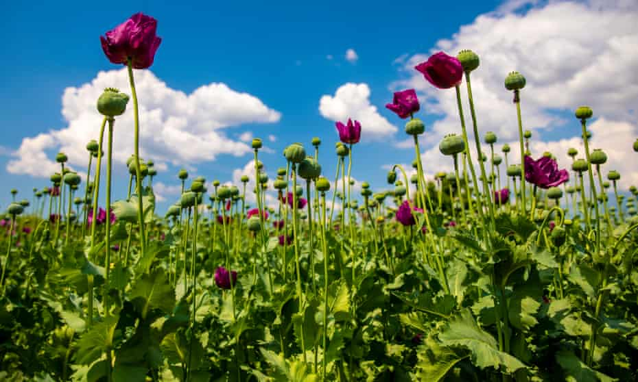 Thin or prune back self-seeders such as poppies.