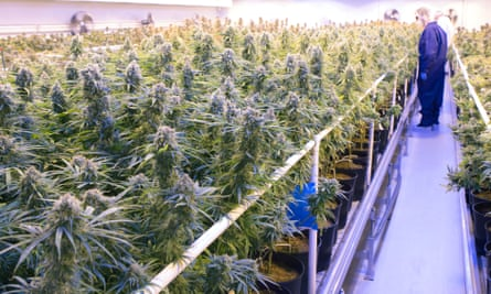 Tilray medicinal cannabis growing facility in Canada.