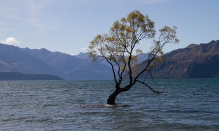 The Wanaka tree after being attacked with a saw