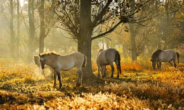 Wild horses near the Schorfheide-Chorin Biosphere Reserve.