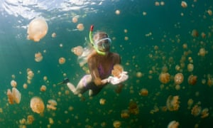 Jellyfish Lake is one of Palau's key tourist attractions.