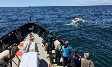 At least 10 whales have been found floating lifelessly off Canada's coast in recent months.