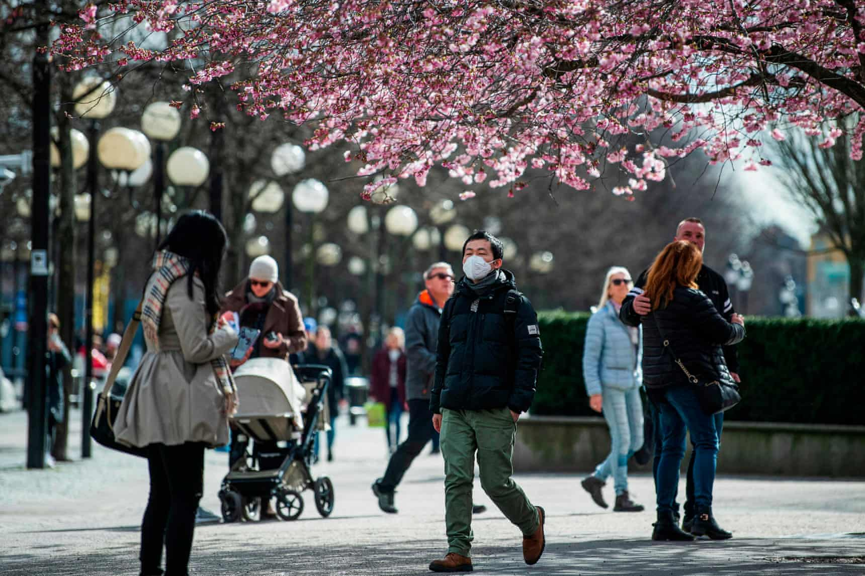 People walk among the cherry blossoms at Kungsträdgården in Stockholm. Sweden has stayed open for business, with a softer approach to curbing the spread of Covid-19 than most of Europe. Photograph: Jonathan Nackstrand/AFP via Getty Images