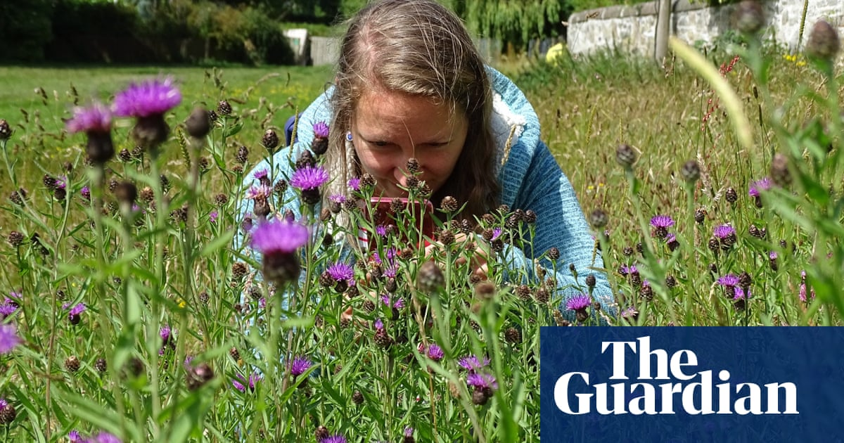 A bug's life: how a volunteer army is putting Britain's wildlife on the record