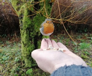A robin sits and eats off the author's hand.