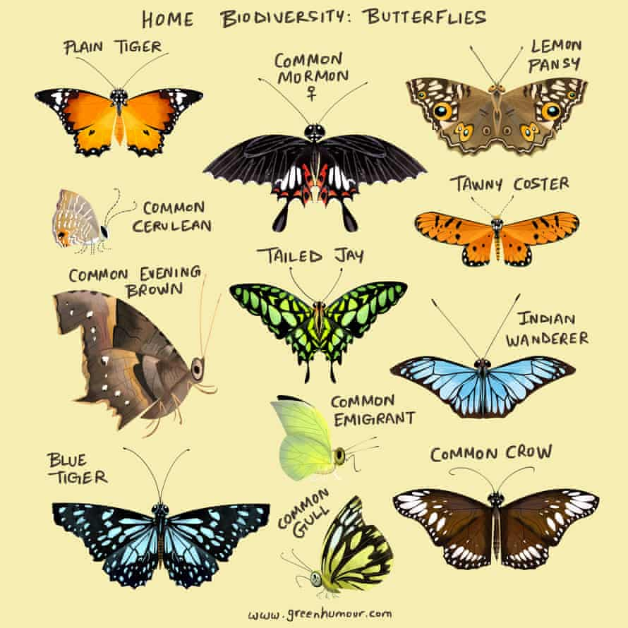 Butterflies that have made Mumbai home