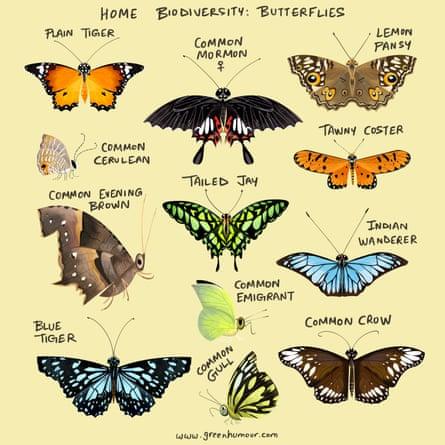 Butterflies have made Mumbai their home