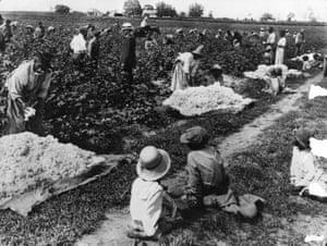 People pick cotton on a plantation in South Carolina.