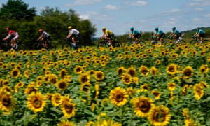 France: Great Britain's Geraint Thomas wearing the overall leader's yellow jersey, rides in the pack past a sunflower field during the 207.5km fourth stage of the Tour de France, cycling between Mondorf-les-Bains and Vittel.