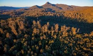 The world heritage Florentine forest in Tasmania.