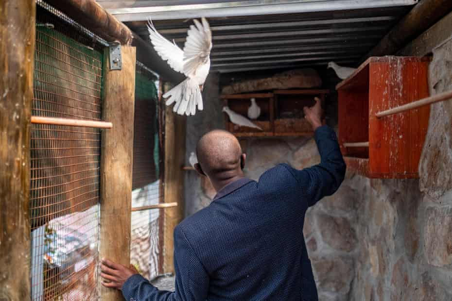 Anele Dyasi enters the college dove coop