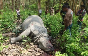 Poachers shot dead a rhinoceros at Burapahar Range of Kaziaranga National park near Potahi bill under Borghup Forest camp, some of 220 km east of Guwahati in Assam, 14 APril, hours after the British Royal's - the Duke and Duchess of Cambridge - visited the Park.