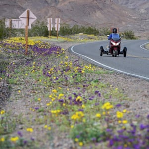 Wildflowers along a road in the Death valley