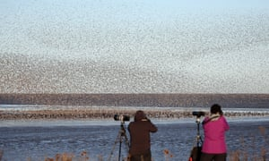 Thousands of waders arrive at RSPB Snettisham in autumn.
