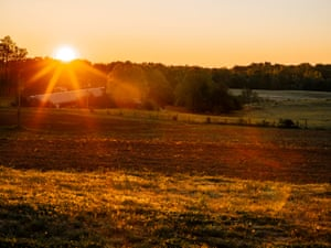 The sun crests the tree line bathing John Boyd Jr's soybean farm in morning light.