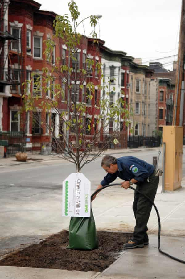 A tree planted as part of the Million Trees New York project.