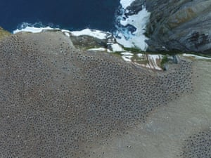 Aerial imagery of an Adélie penguin breeding colony on Heroina Island, Danger Islands, Antarctica