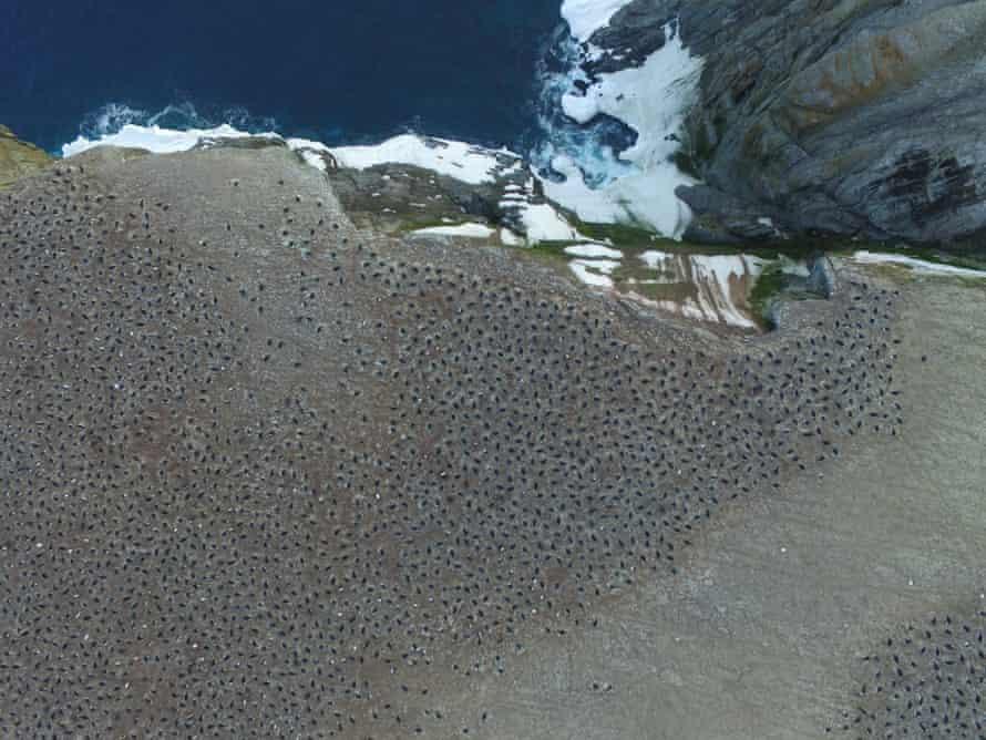 Aerial imagery of an Adélie penguin breeding colony on Heroina Island, Danger Islands, Antarctica