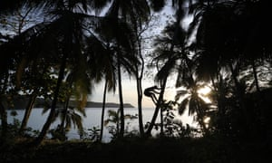 Youth collecting coconuts at sunset