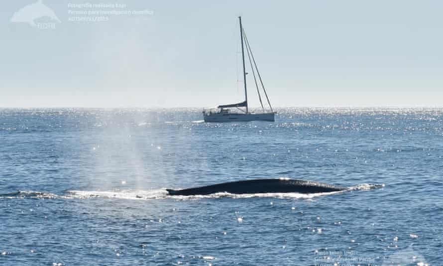 Sitings of blue whale off coast of Galicia.