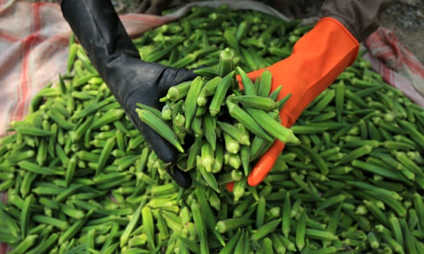 'Okra is the most foul thing ever grown': chefs on their most hated ingredients