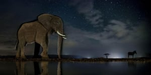 Now You See Me by Bence Máté World press photo awards: nature category, third prize, storiesAn elephant and zebra at a watering hole in Zimanga private game reserve, Mkuze, South Africa. Animals pictured at night in their natural habitats.
