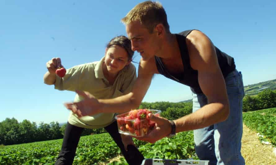 students picking fruit