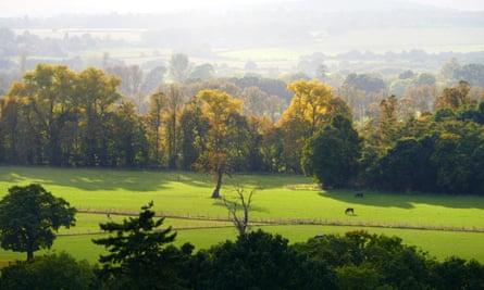 Woodland, Cliveden House, Buckinghamshire