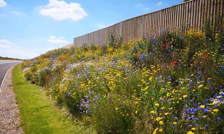 A 'wildflower' verge near East Midlands airport.