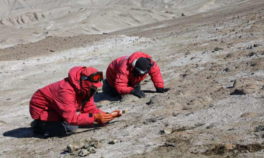 Uncovering fossils on site