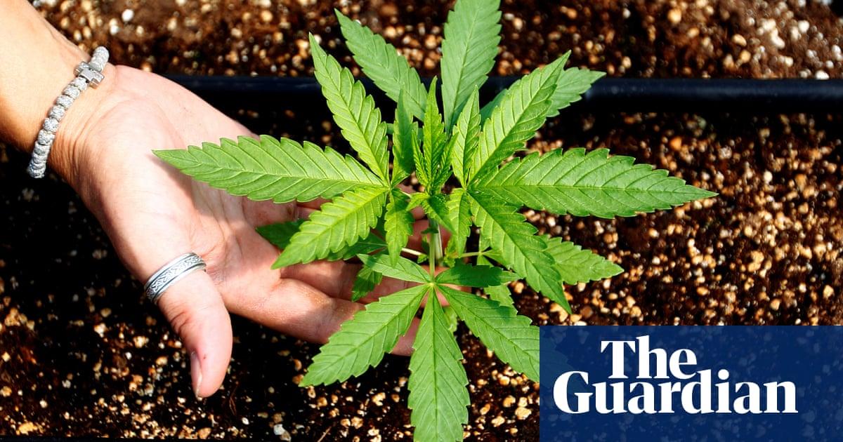 topowe marki jakość wykonania super słodki Australian Capital Territory votes to legalise cannabis for ...