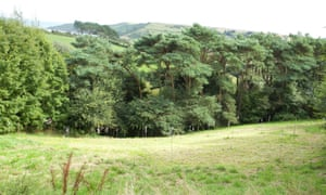 The artist's meadow at Damon Albarn's farm in Devon.