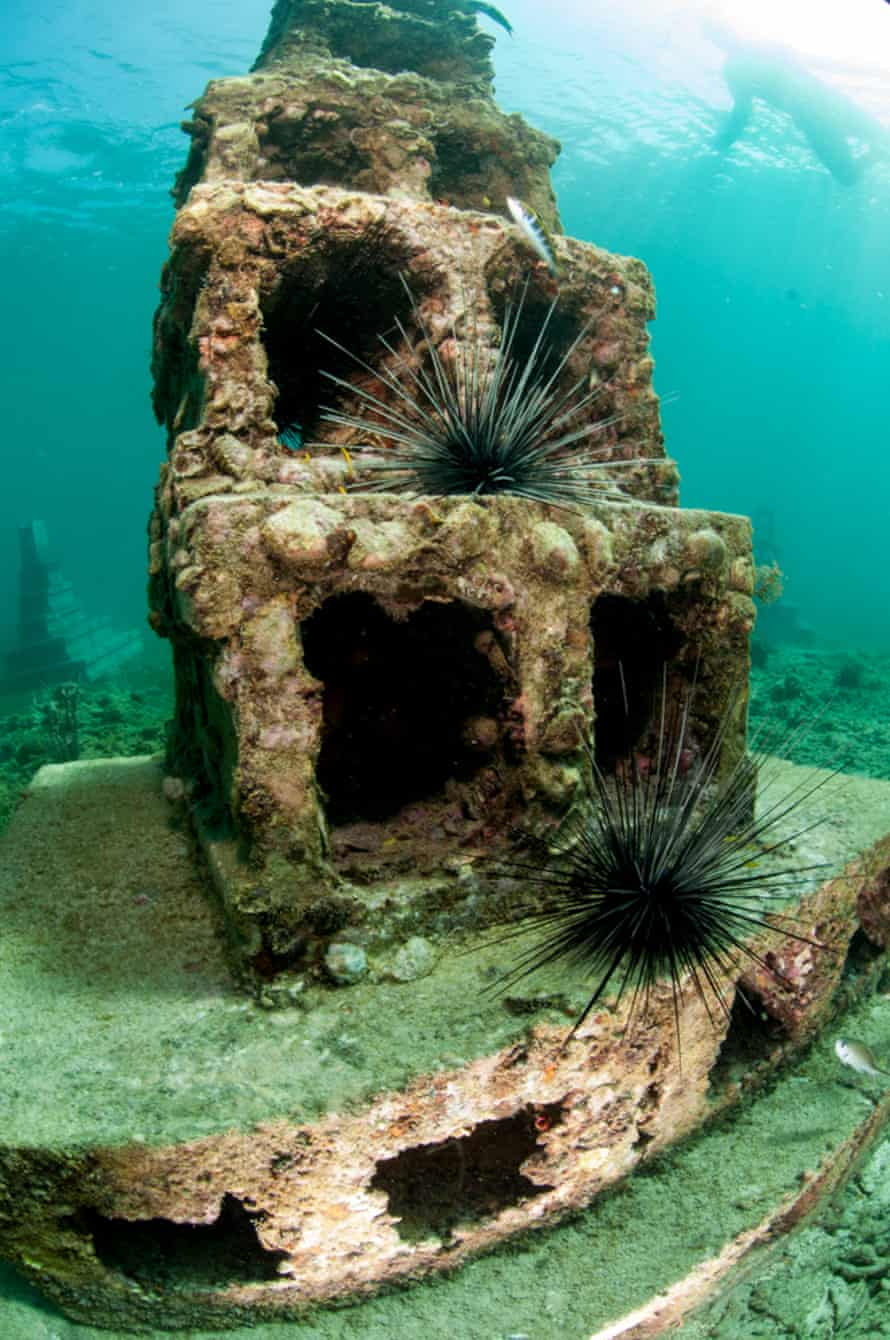 An older section of the artificial reef showing signs of colonisation.