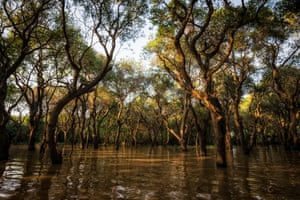 Tonlé Sap mangrove forest, 2016.