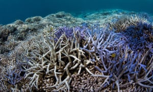 This brightly coloured corals around are 'fluorescing', a sign that they are distressed.
