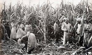 Sugar cane cutters in Jamaica, 1891.