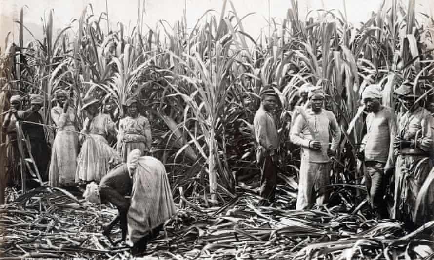 Sugar cane cutters in Jamaica in 1891