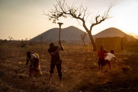 A family in Malawi's tobacco fields.