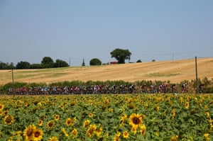 <strong>Stage Thirteen</strong><br>Stage Location: Muret to Rodez<br>Stage Winner: Greg Van Avermaet<br>The peloton makes its way past the sunflower fields