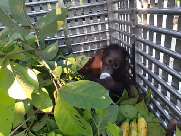 Damai, a former pet, who arrived at the Forest School this month.