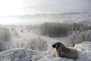 A dog looks on at the snow-covered scenery in the town of Ovacık in Tunceli, Turkey