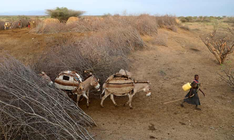 Turkana herders are driven to Uganda and Ethiopia in search of water and grazing land for their livestock