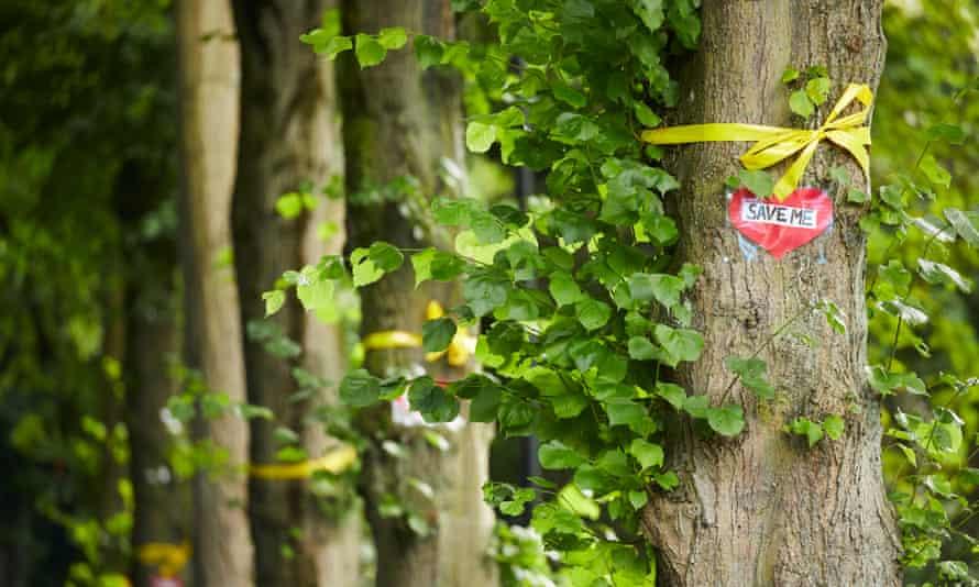 Trees line Rivelin Valley Road in Sheffield