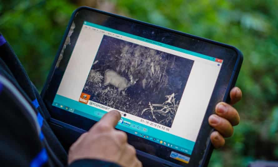 Image of the area's wildlife are captured by hidden cameras and downloaded on to tablets.