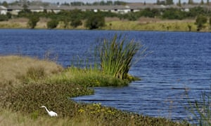An egret looks for food along Valhalla pond in Riverview, Florida. Trump has called clean water protections 'very destructive'.