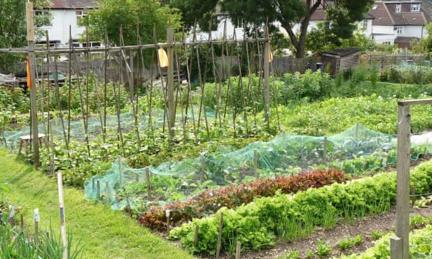 Allotments in Finchley, London