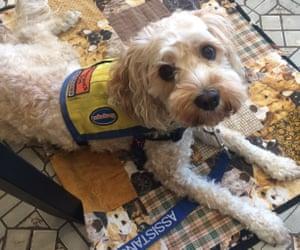 Australian writer Fiona Wright's assistance dog Virginia