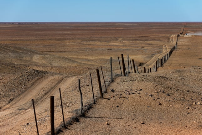 The dingo fence near Coober Pedy, built in the 1880s and extending for 5,600km. Photograph: Krzysztof Dydynski/Getty Images