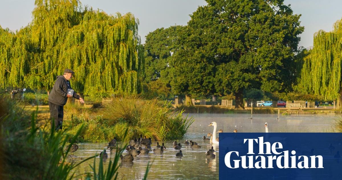 No alimentes a los patos: Los parques reales advierten sobre el comportamiento de las aves acosadoras después del cierre